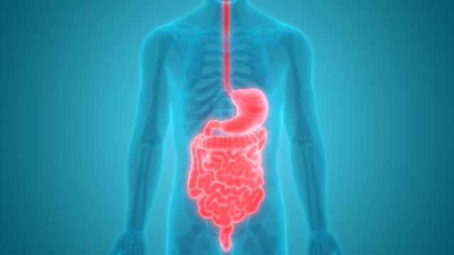 Memahami Fungsi dan Anatomi Sistem Pencernaan Manusia